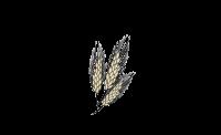 Farmers Elev logo COLOR.png